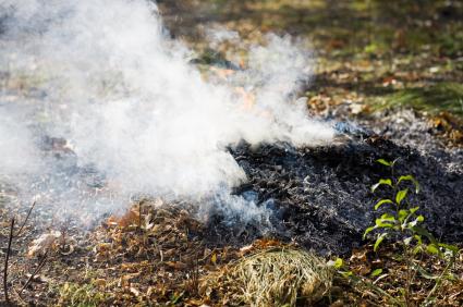 Image result for smouldering leaves